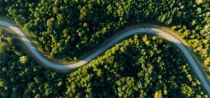 Winding path through trees
